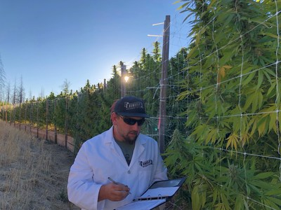Nathaniel Pennington, founder & CEO of Humboldt Seed Company evaluates Humboldt cannabis varieties in California's cannabis epicenter.
